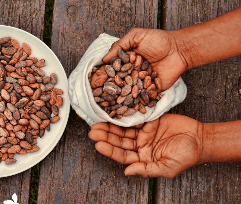 Exploring Shamanism: Ceremonial Cacao